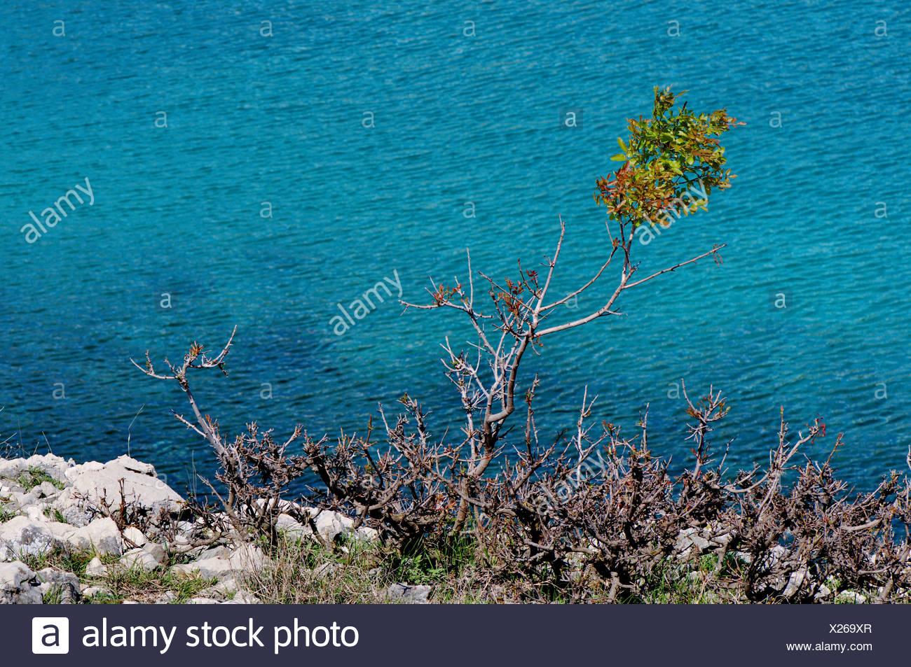 sea, Mediterranean sea, Adria, mediterranean, water, macchia, karst, Croatia, Krk, turquoise, turquoise blue, blue, holiday, vac - Stock Image