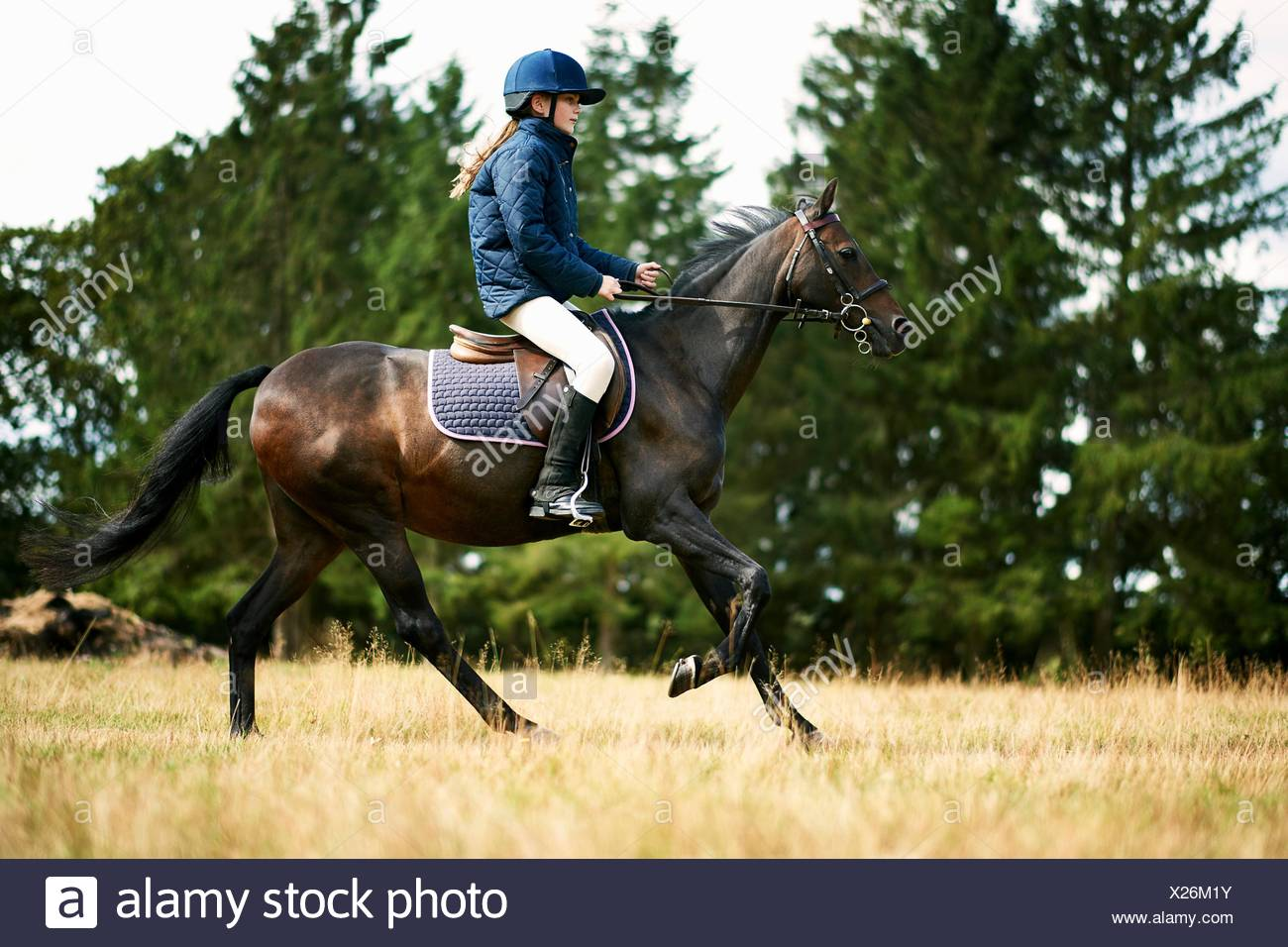 Girl riding horse in field Stock Photo