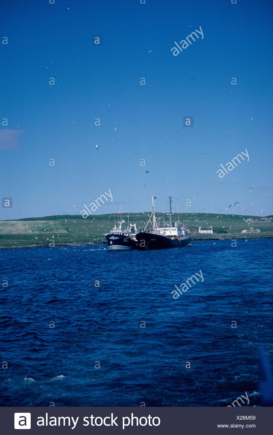 Fishing Commercial Fishing vessels attracting gulls Bressey Shetland - Stock Image