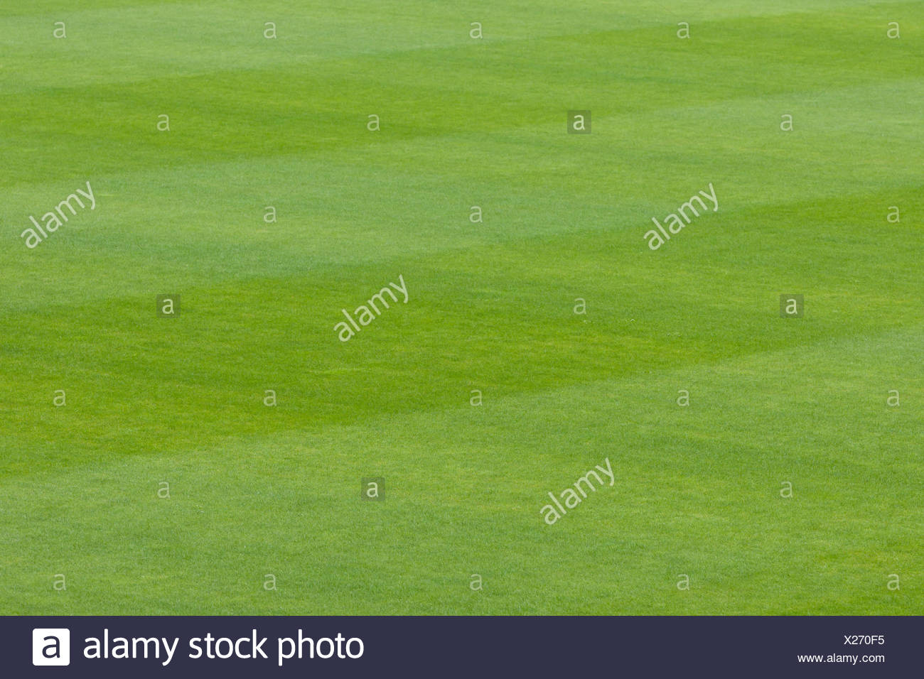 Lush green grass background - Stock Image