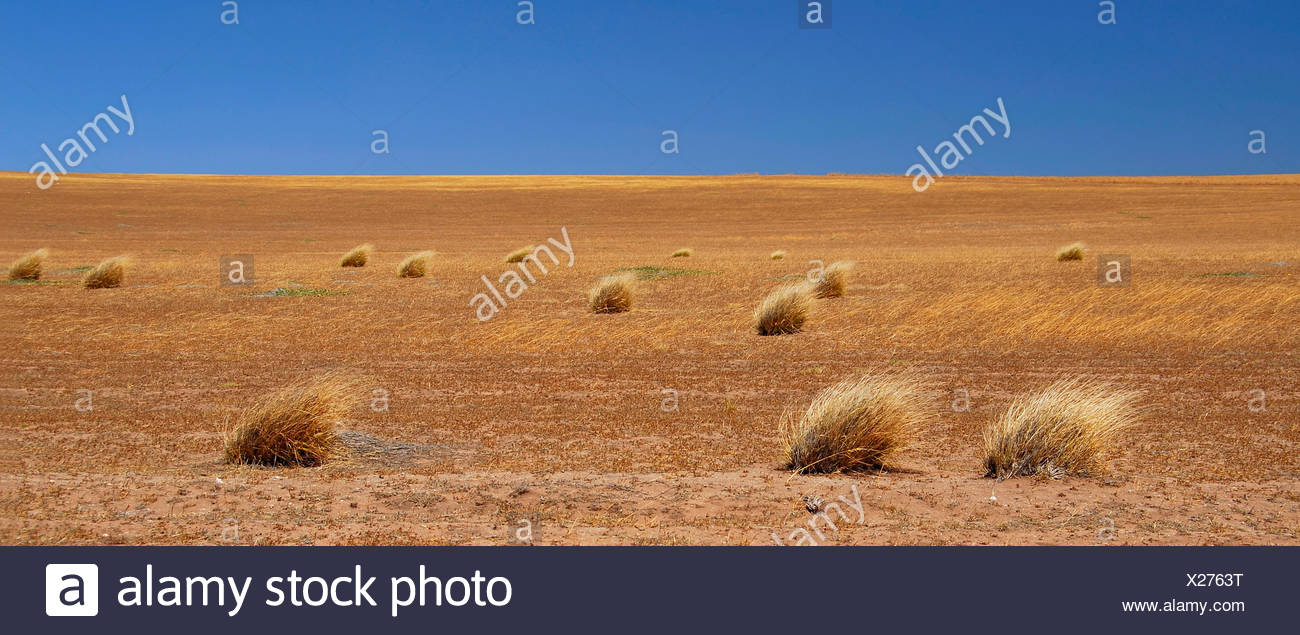australia bushes fields corn field outback straw solitude veld agriculture - Stock Image
