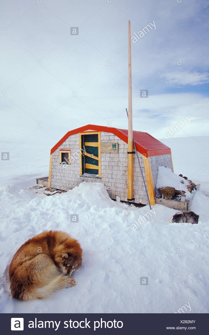 Sled dogs rest emergency shelter during dogsled - Stock Image