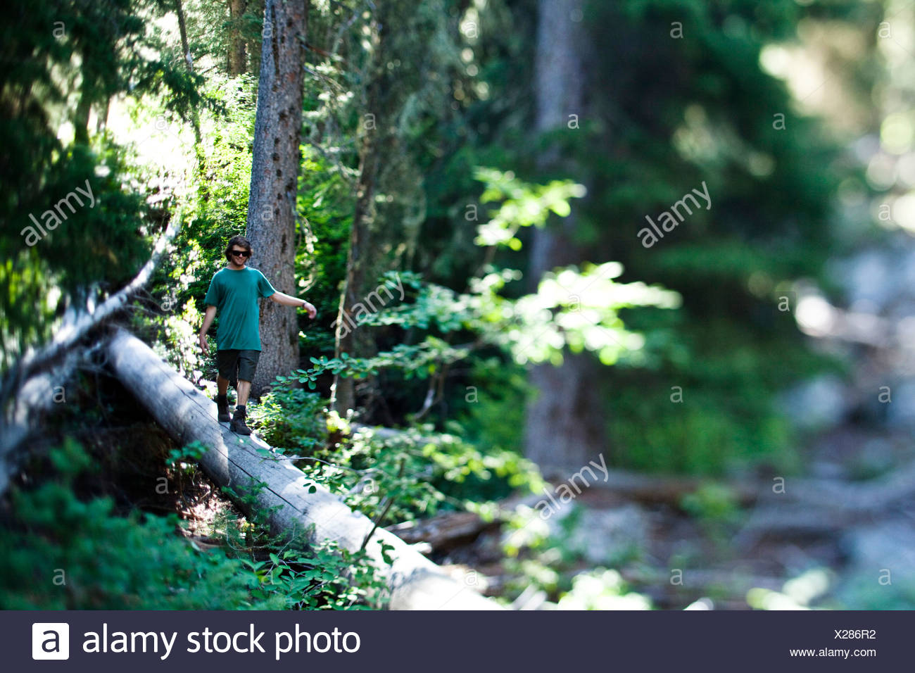 A young man hiking walks across a fallen log in Wyoming. - Stock Image