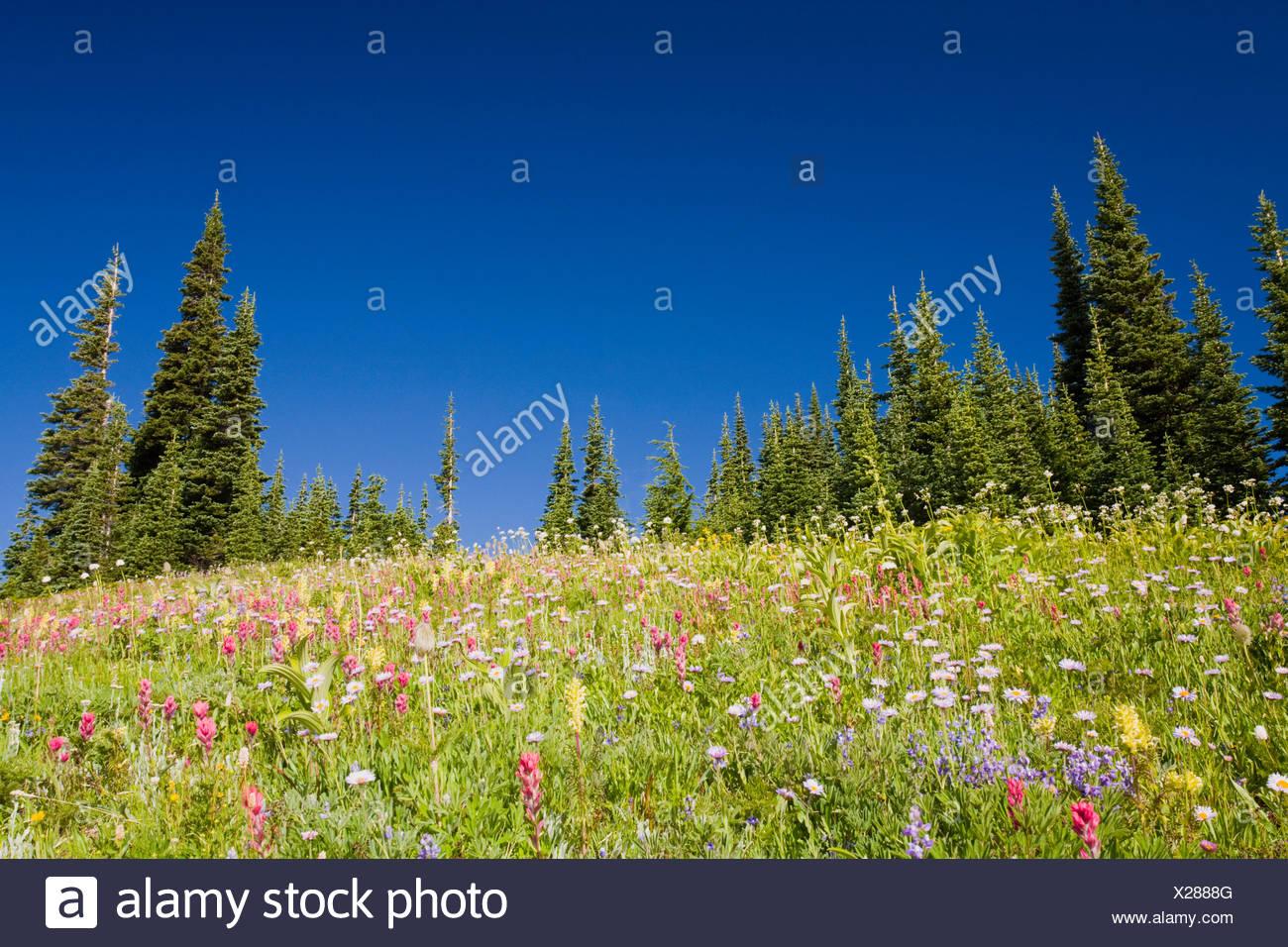 Mount rainier national park - Stock Image