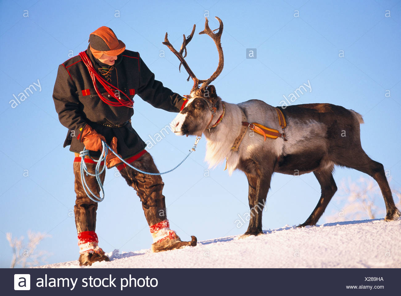 A Laplander and a reindeer, Lapland, Sweden. - Stock Image