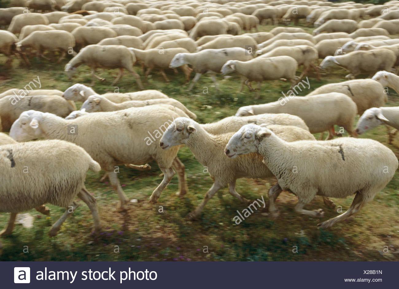 navarre flock