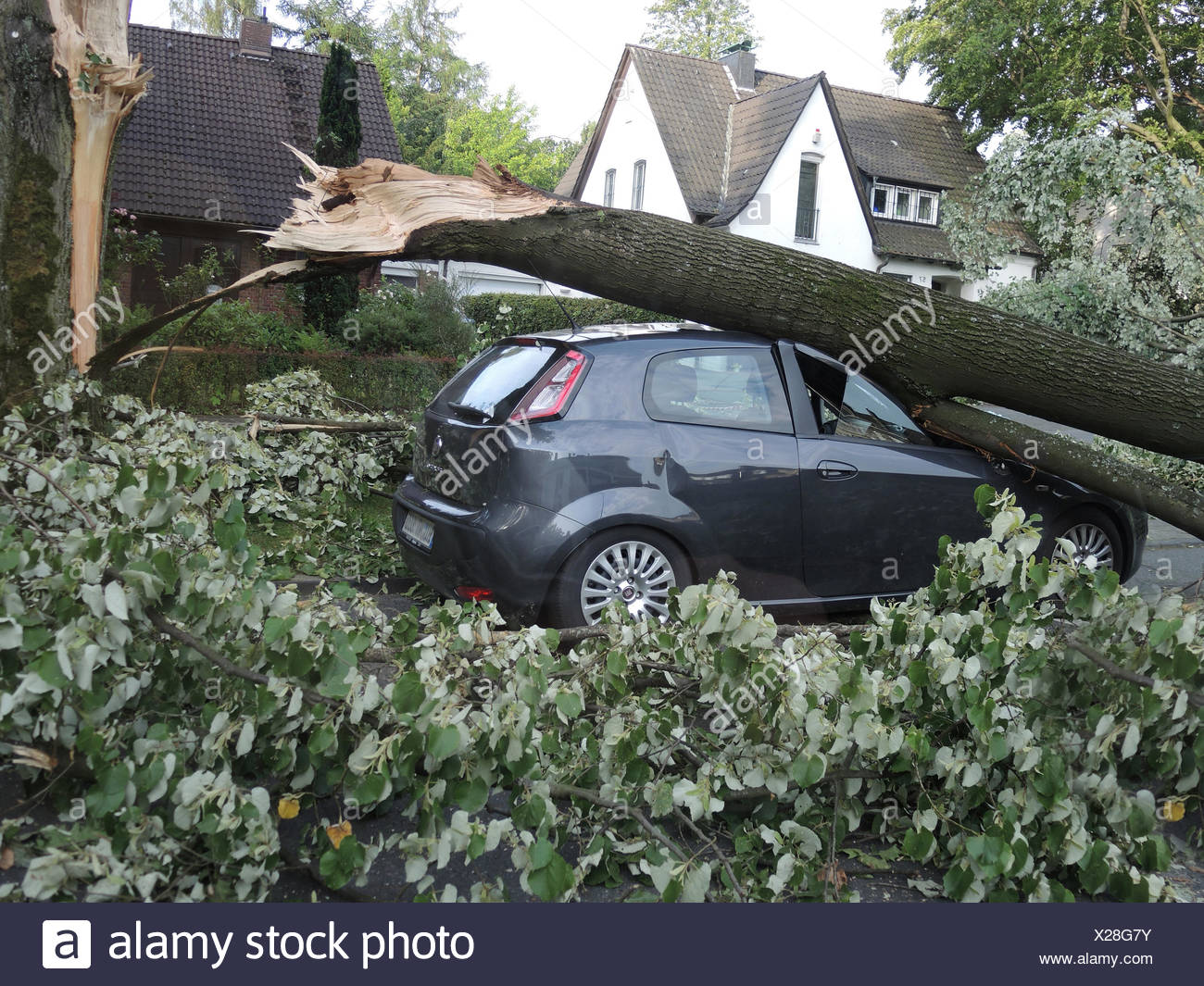 tree fallen on a parked car, damages by storm front Ela at 2014-06-09, Germany, North Rhine-Westphalia, Ruhr Area, Bochum Stock Photo