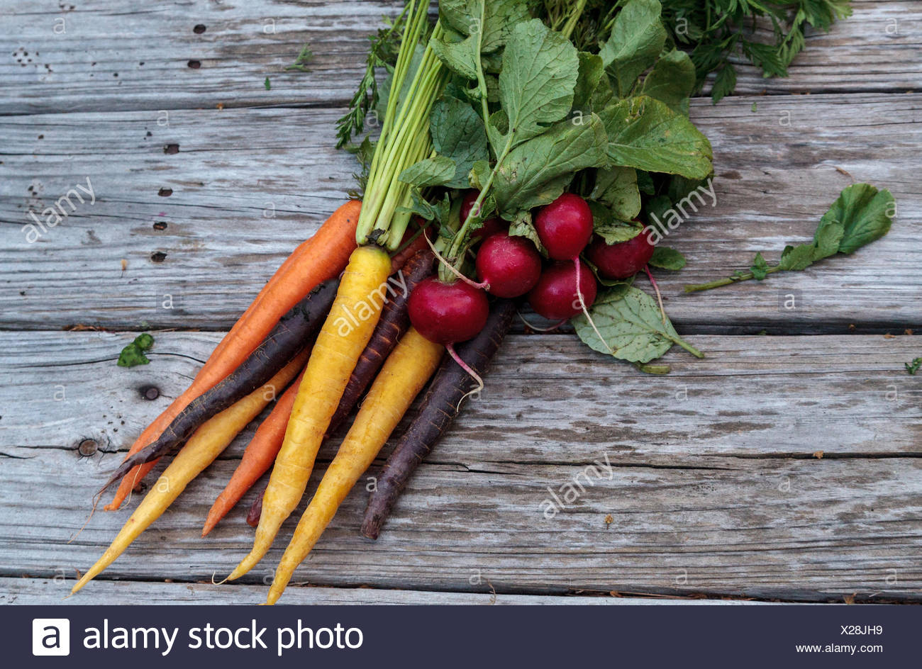 Organic red radishes and carrots - Stock Image