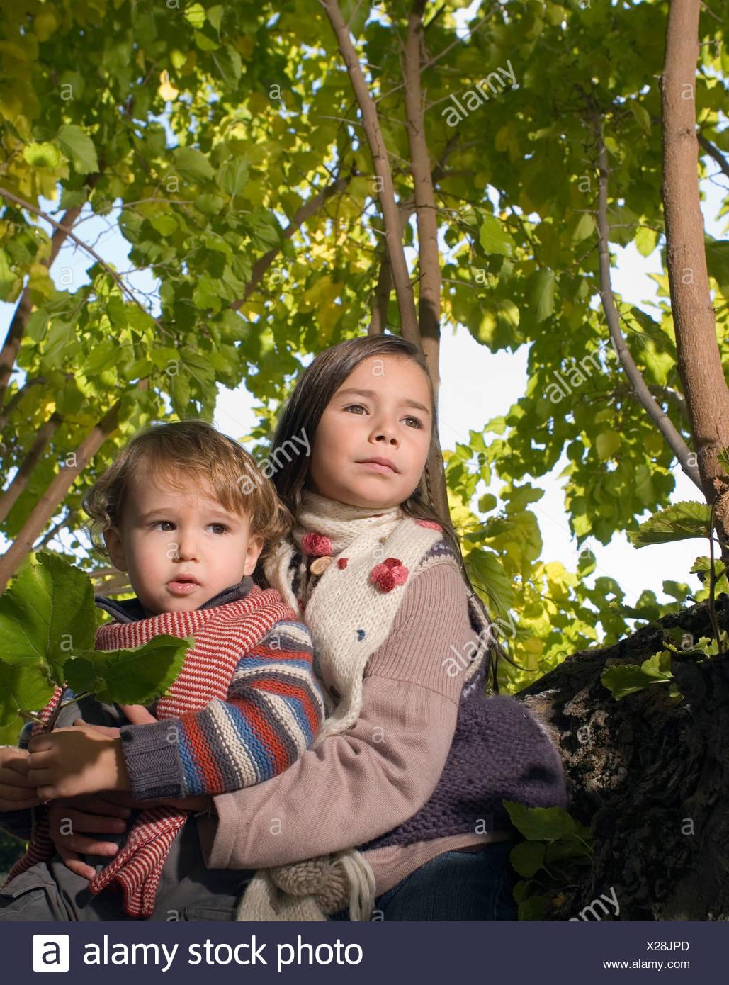 Girl holding boy in a tree Stock Photo