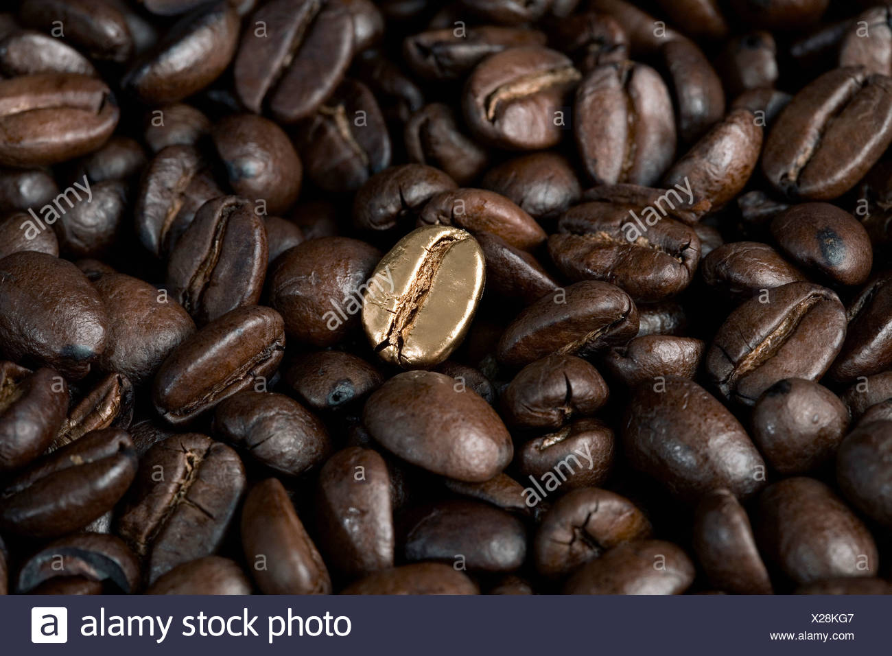 A gold coffee bean - Stock Image
