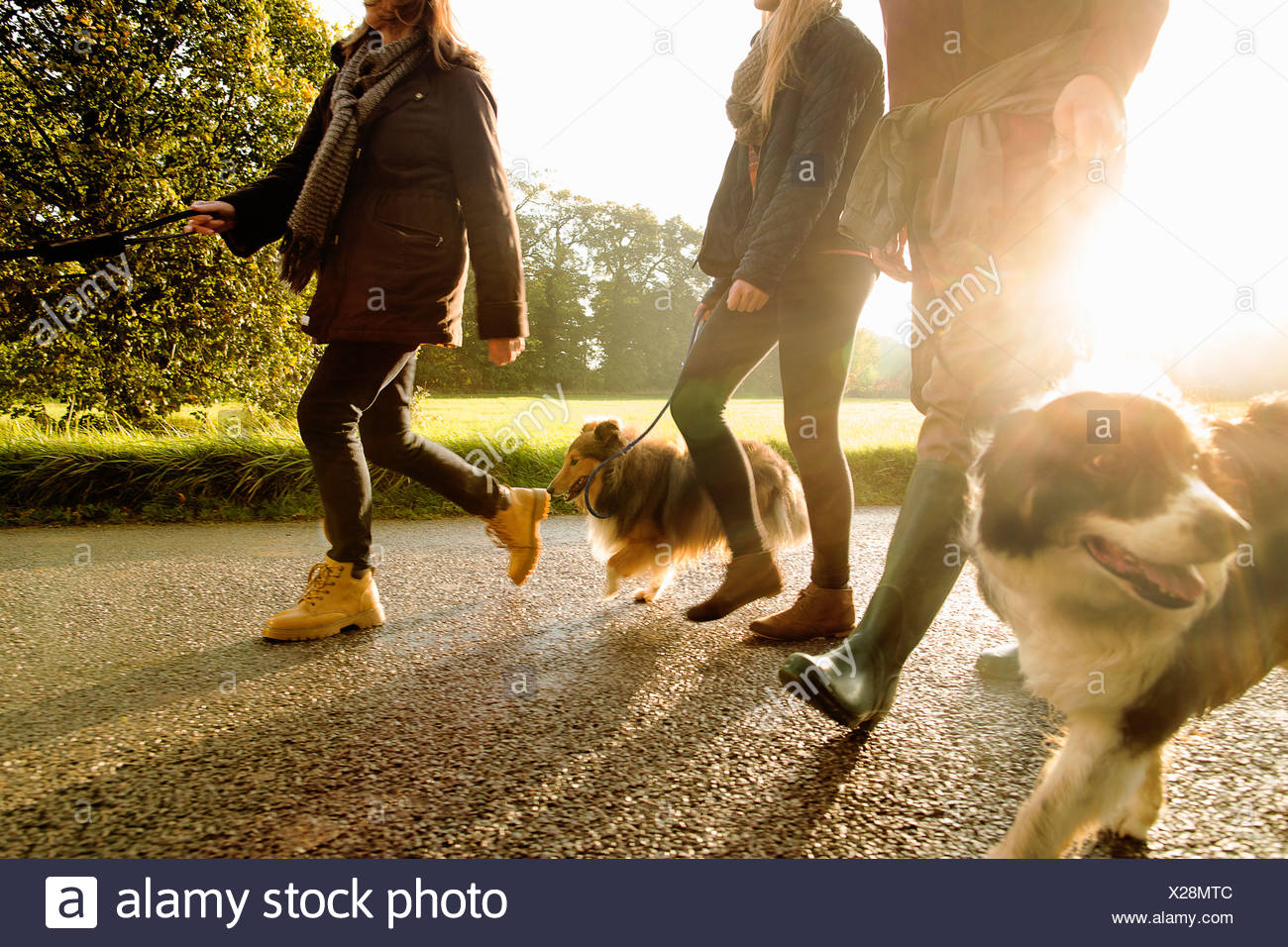 Senior couple and granddaughter walking dogs, Norfolk, UK - Stock Image