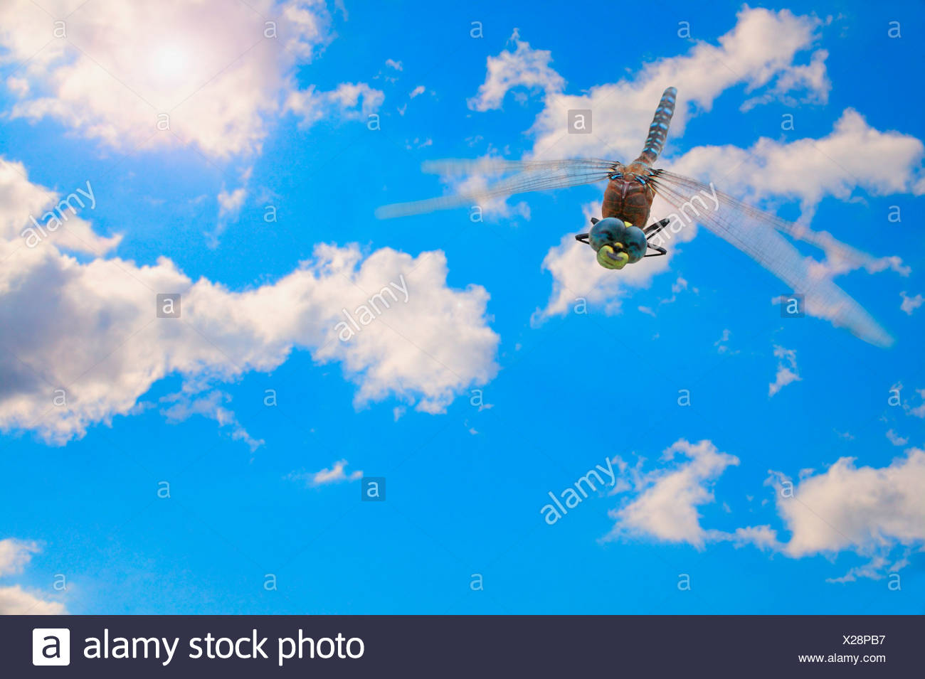 A computer edited bug against a blue sky - Stock Image