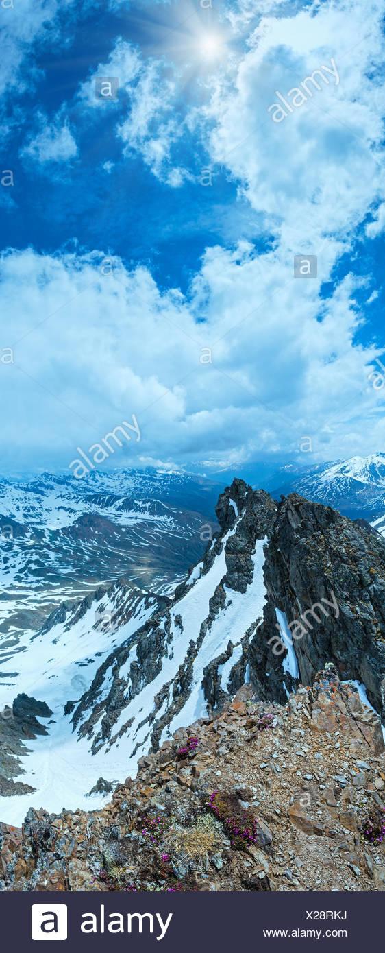 Alp flowers over mountain precipice - Stock Image