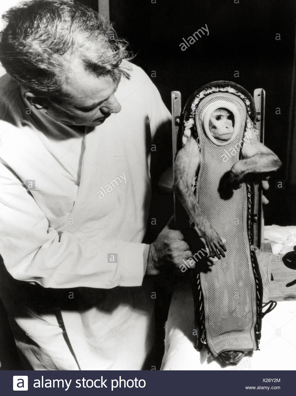 Sam the Monkey After His Ride In The Little Joe 2 Spacecraft - Stock Image