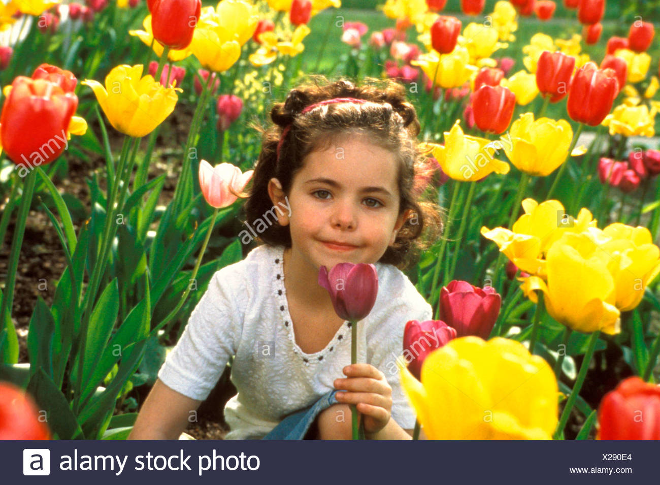 Girl with tulip MR842 - Stock Image