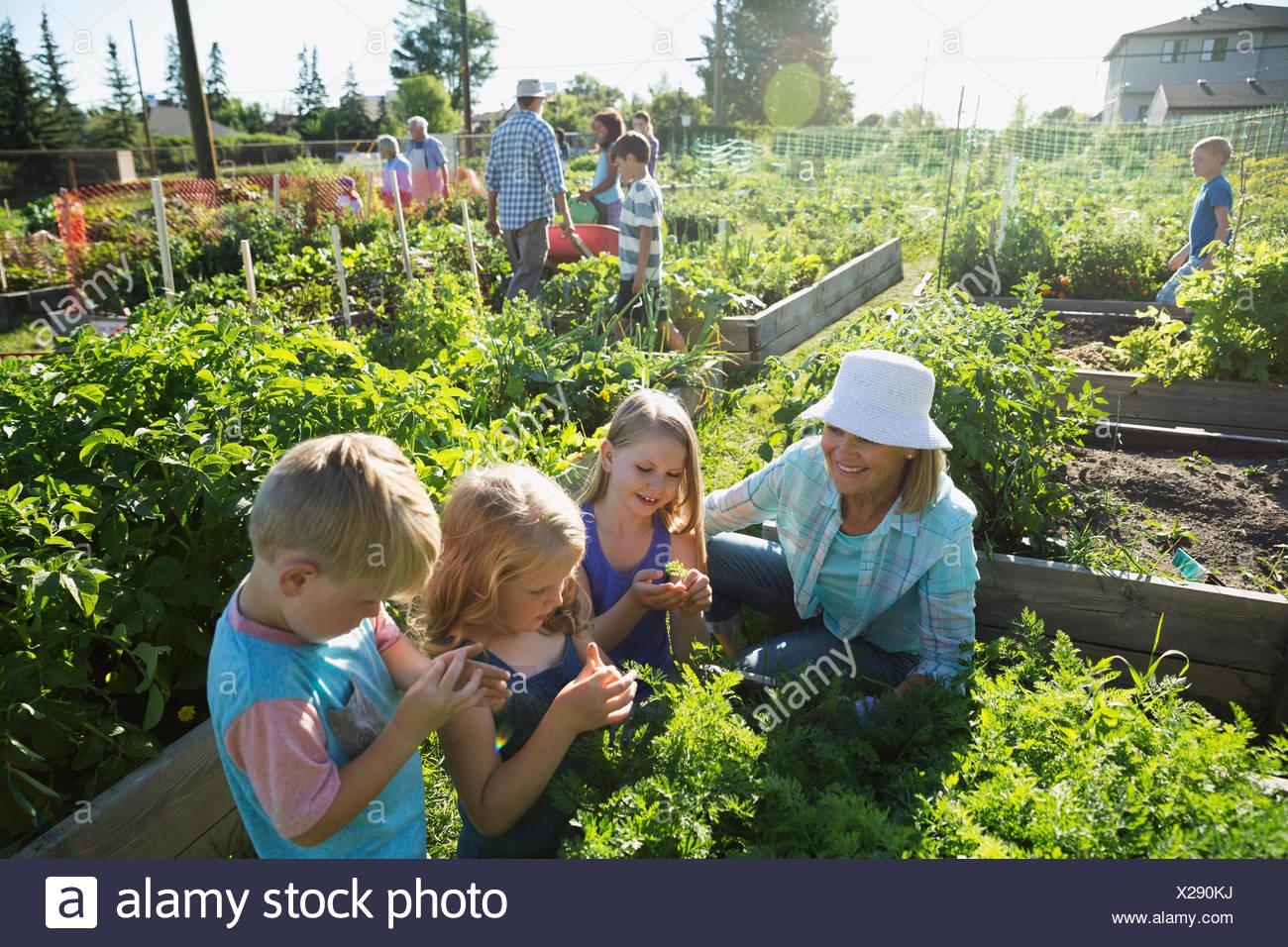 Grandmother and grandchildren tending plants in community garden - Stock Image