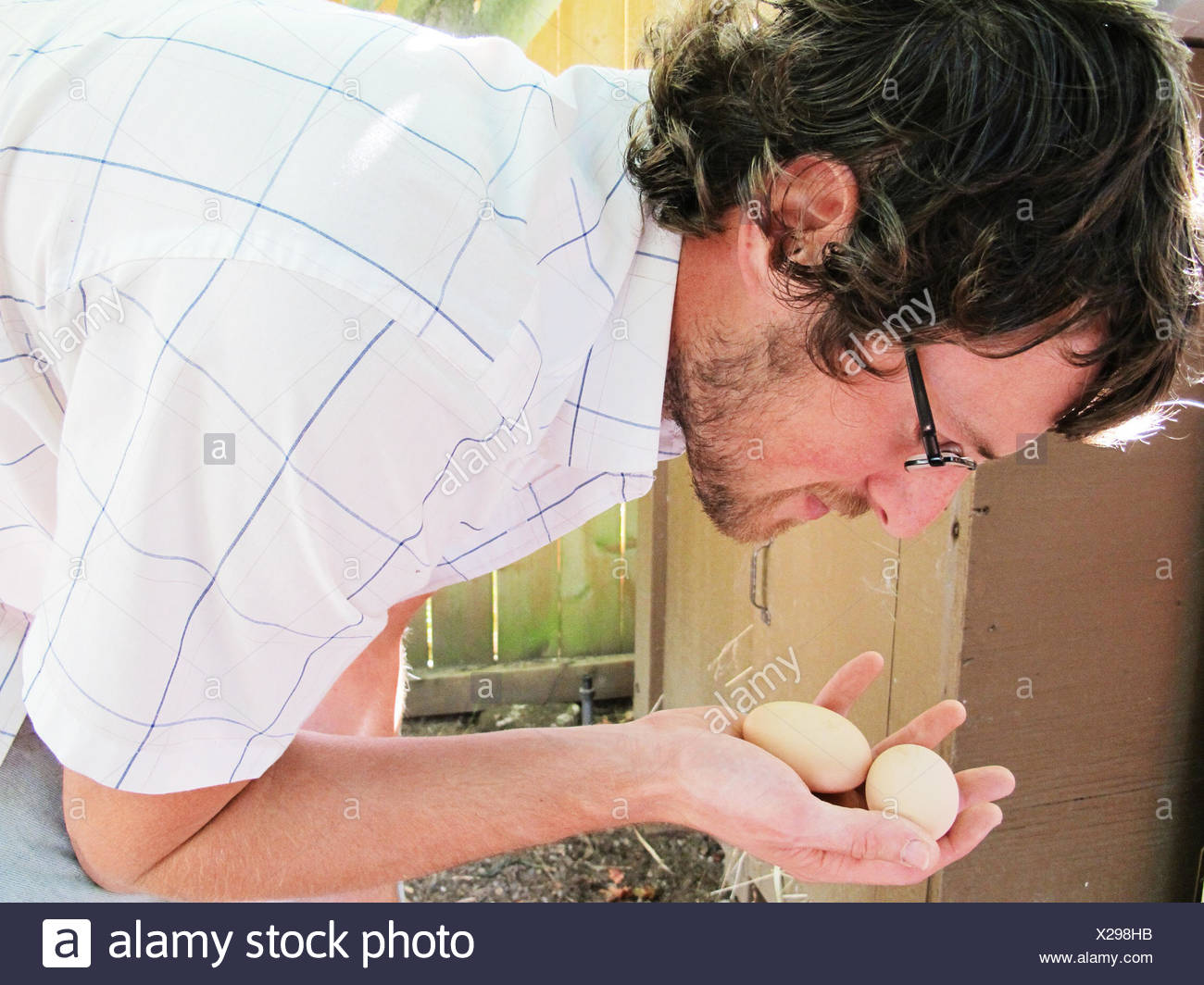 Man gathering eggs from chickens in backyard - Stock Image