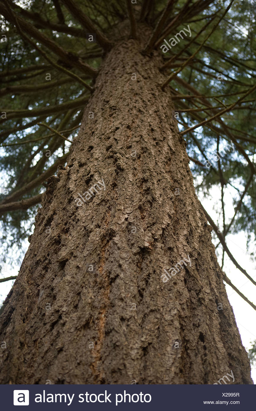 Tree, low angle view - Stock Image