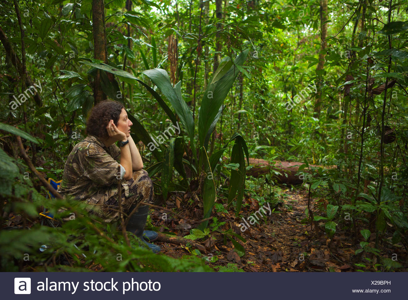 An ornithologist listens, watches, and waits for a striped manakin. - Stock Image