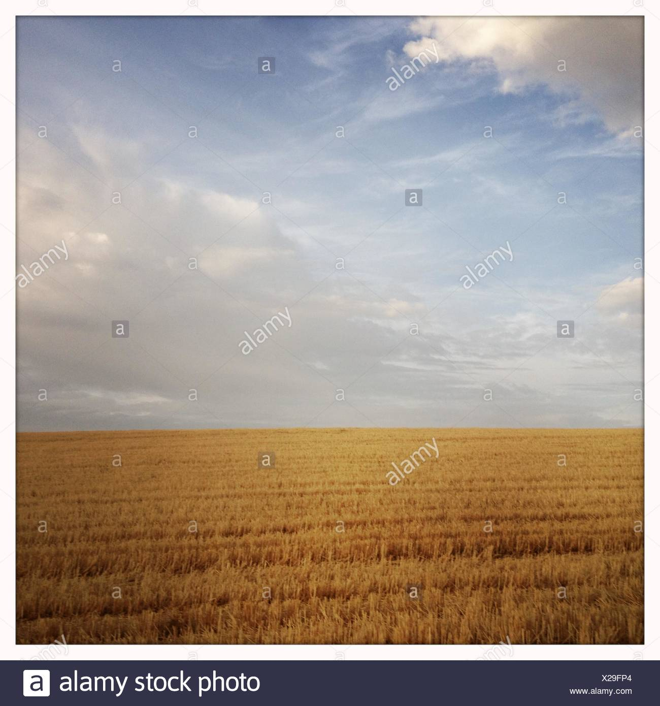 Spain, Cloudy sky over golden field - Stock Image