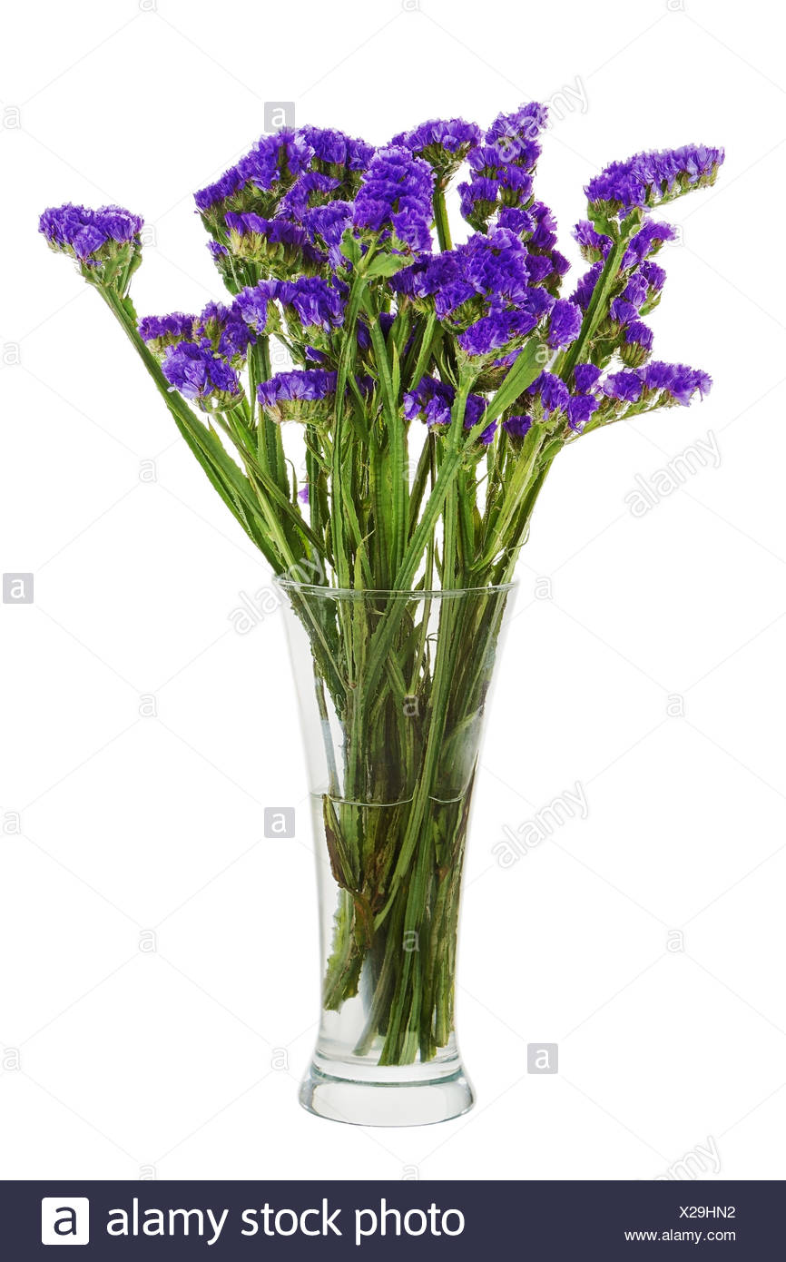 Bouquet From Statice Flowers Arrangement Centerpiece In Vase Isolated On White Background Closeup Stock Photo Alamy