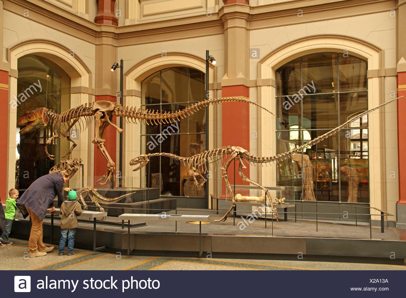 Dinosaur skeletons - Stock Image