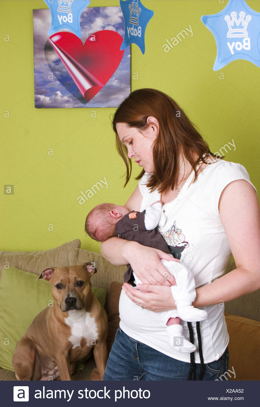 Newborn baby in arms and domestic dog on sofa - Stock Image
