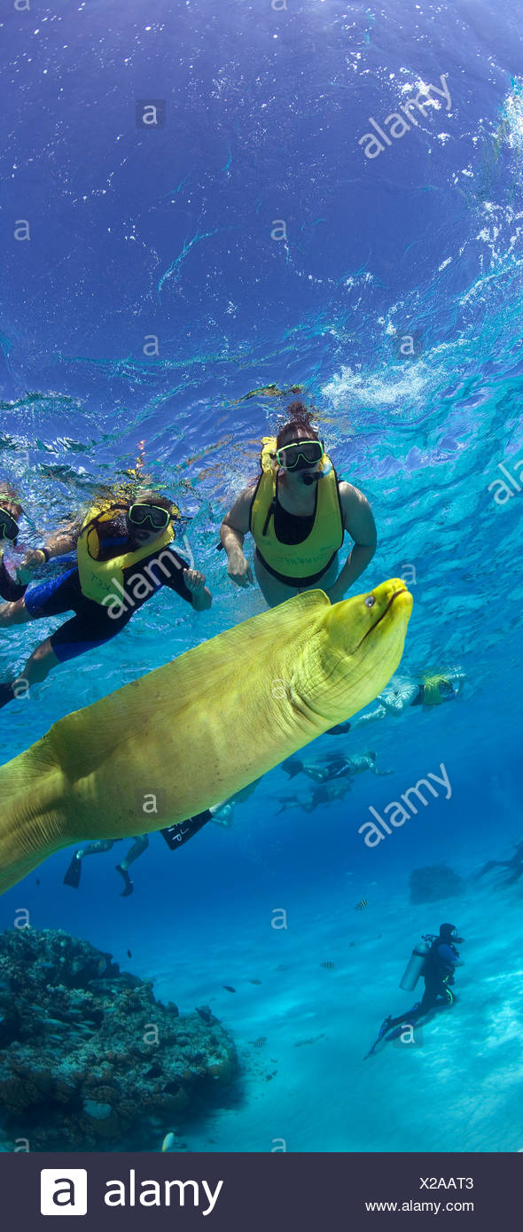 Snorkelers and Green moray eel (Gymnothorax funebris) Grand Cayman British West Indies Stock Photo