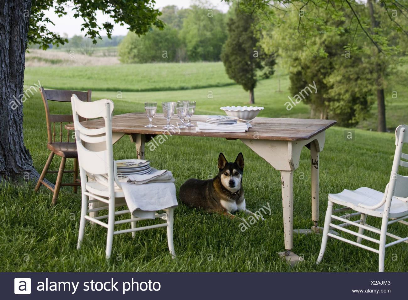 Maryland USA table laid white china dog on guard under table - Stock Image