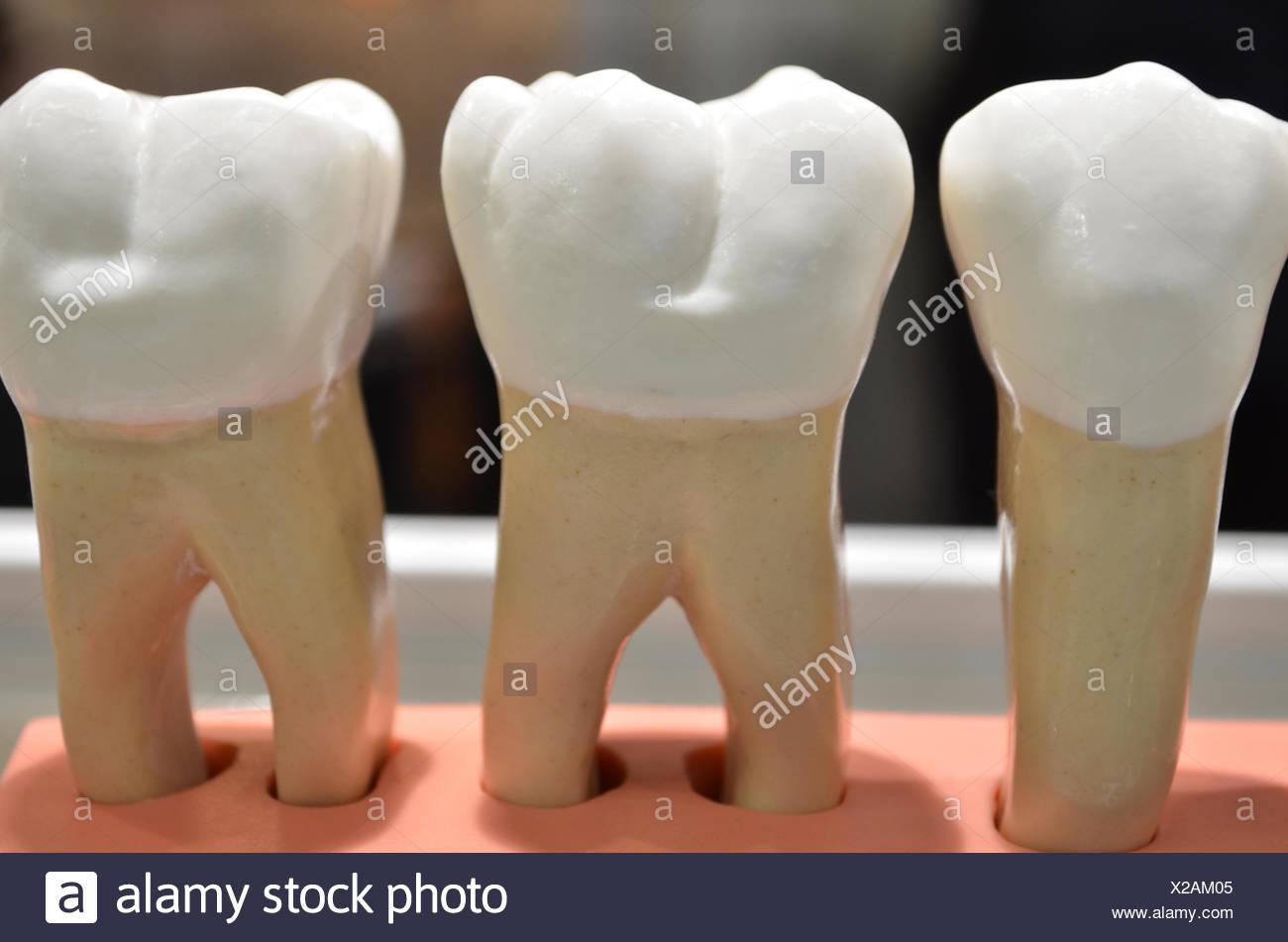teeth tooth dentistry - Stock Image