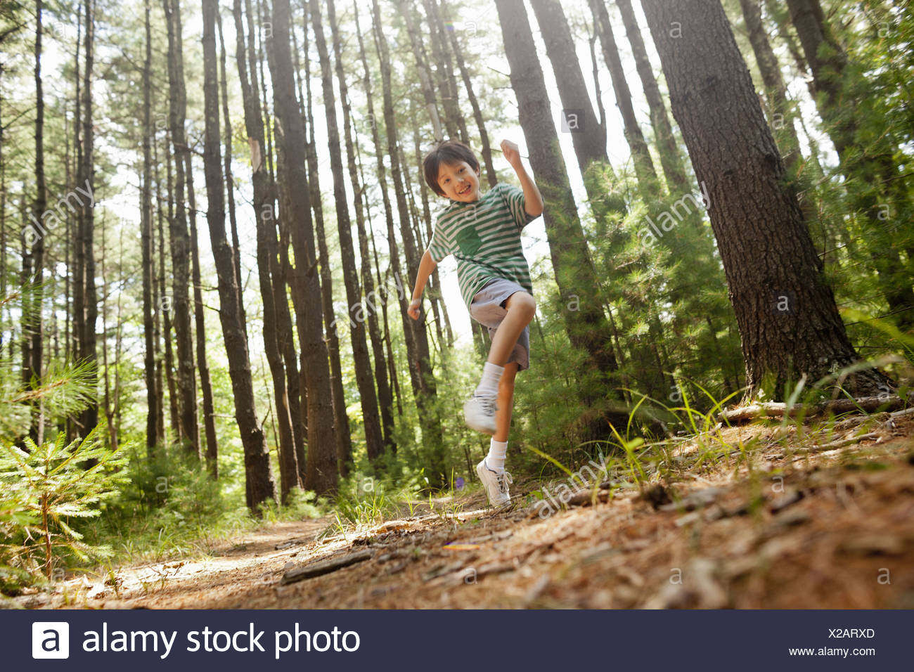 Woodstock New York USA young boy playing in the pine forest tree trunks - Stock Image