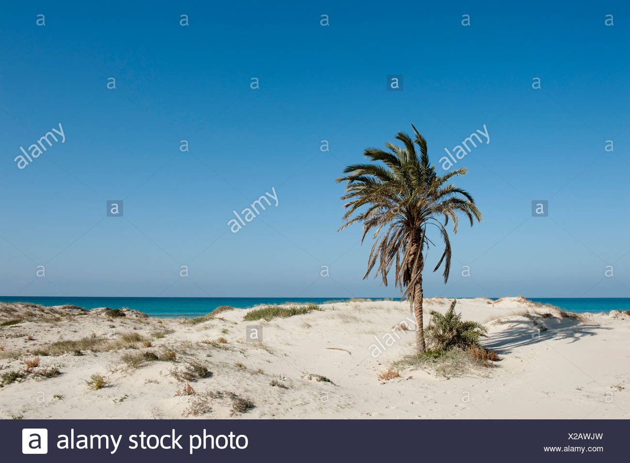Deserted beach with palms, white sand, island of Djerba, Tunisia, Maghreb, North Africa, Africa - Stock Image