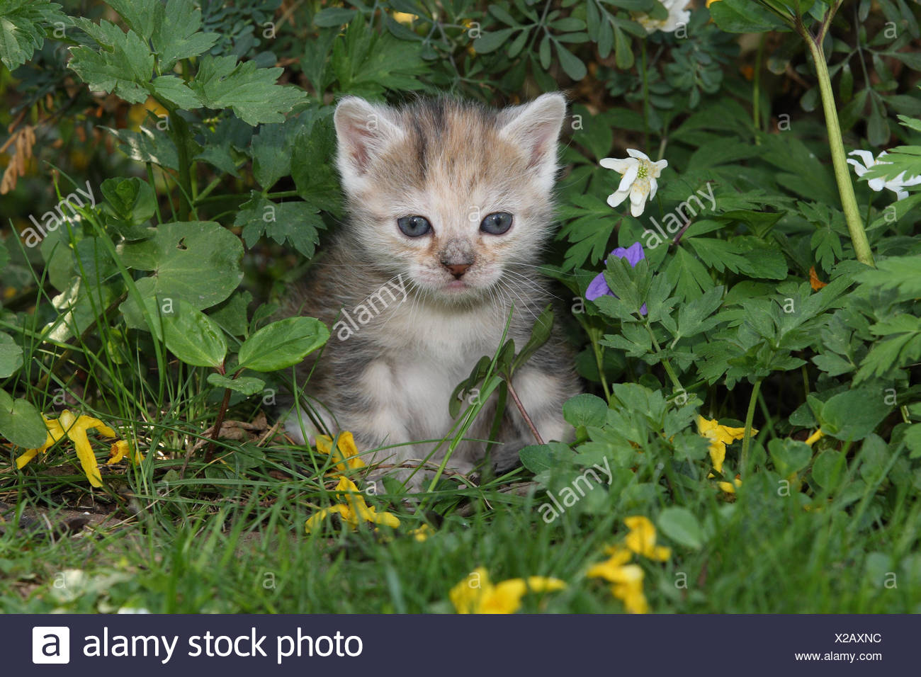 Cat, young, sit, meadow, garden, animals, mammals, pets, small cats, Felidae, domesticates, house cat, young animal, kitten, small, awkward, clumsy, helplessly, sweetly, play, curiosity, flowers, hervorschauen, plants, individually, alone, young animals, animal baby, nature, outside, - Stock Image