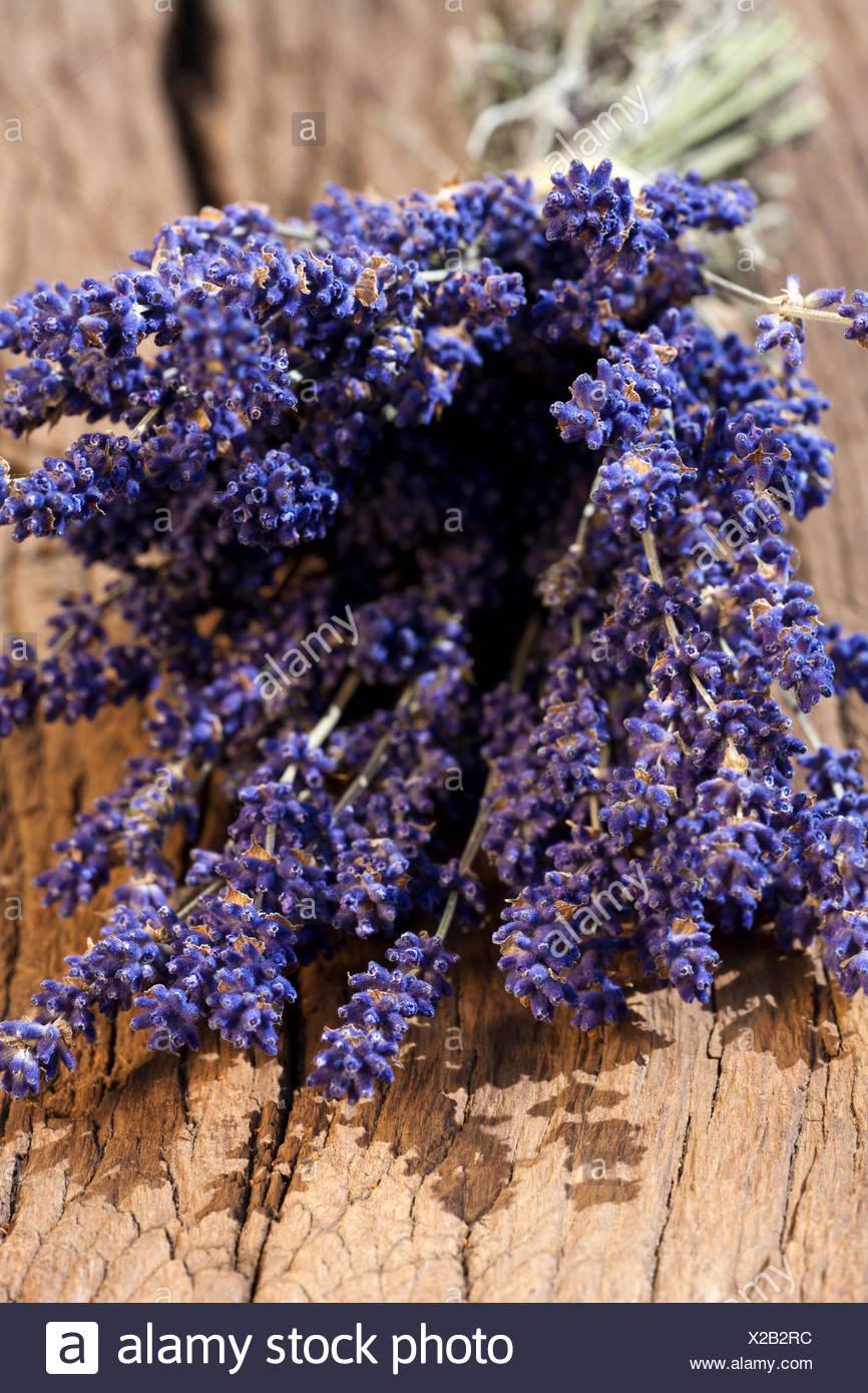 Ein Bund frisch geernteter Lavendelblüten zusammengebunden zum trocknen auf einem alten Holztisch - Stock Image