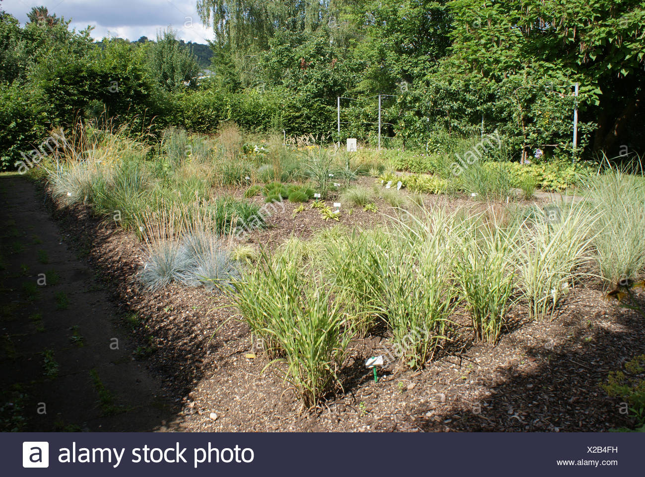 Grasses - Stock Image