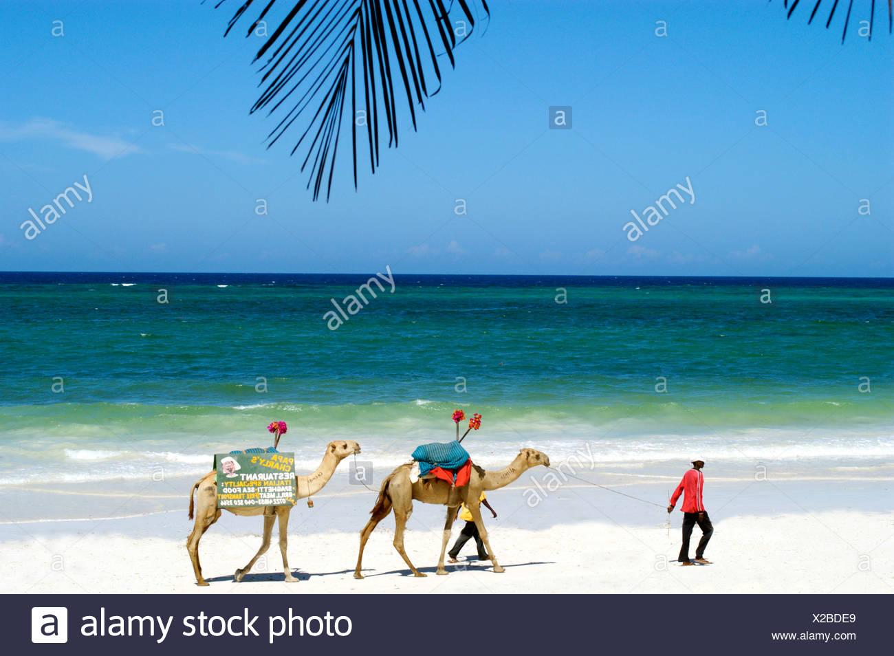 Diani Reef Resort, Kenya - Stock Image