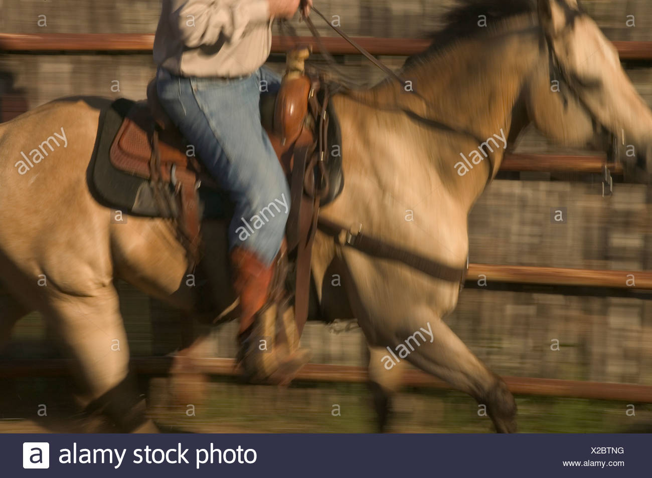 A Texan cowboy takes his horse out for a ride on the ranch. Stock Photo