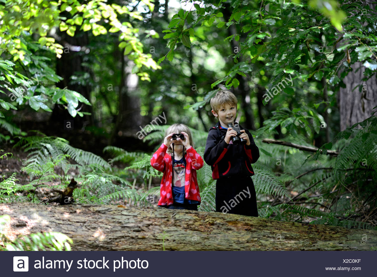 Young boy and girl (brother and sister) bird watching in woodland in summer Norfolk Model Released - Stock Image