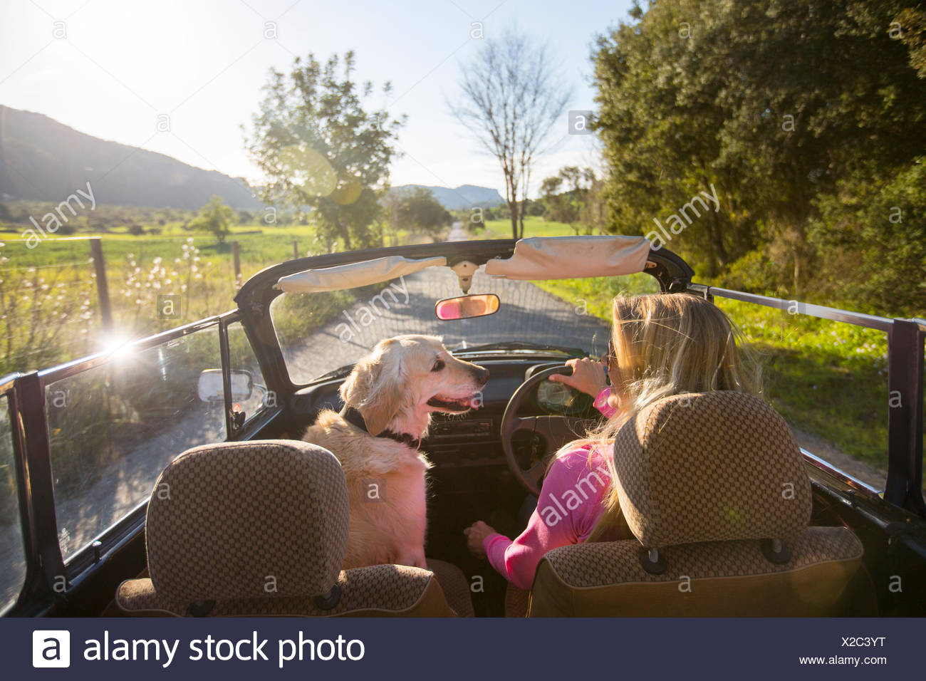 Mature woman and dog, in convertible car, rear view - Stock Image