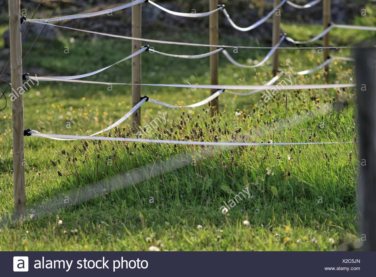 wire fence covering. Close-Up Of Fence Covering Grass - Stock Image Wire Fence Covering