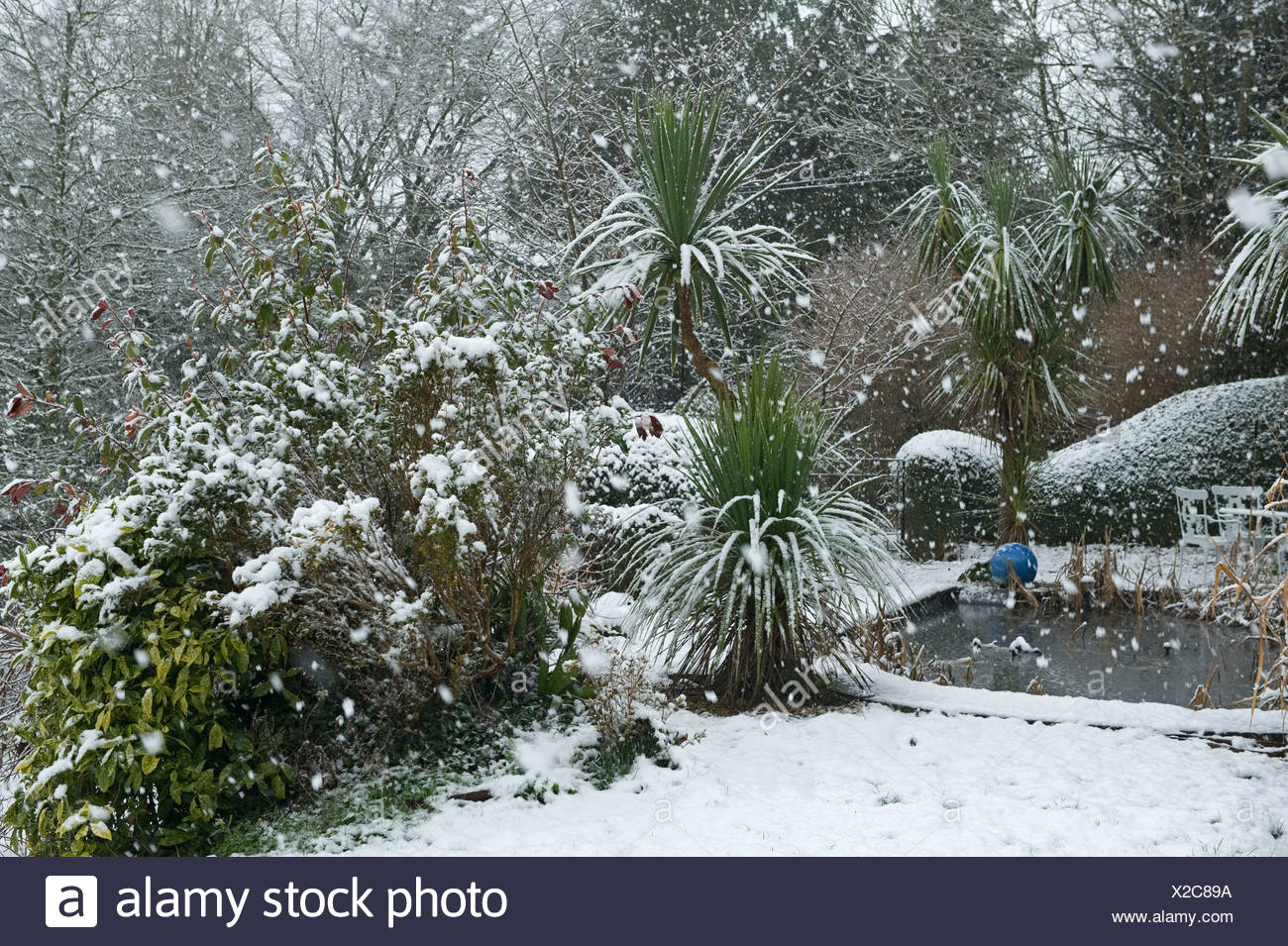 Garden pond & shrubs in a heavy snow storm, Devon, - Stock Image