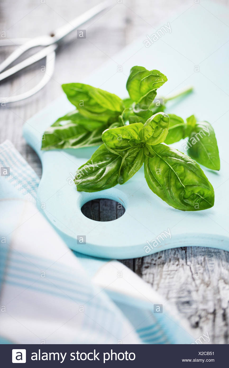 Basil leaves on a wooden board - Stock Image