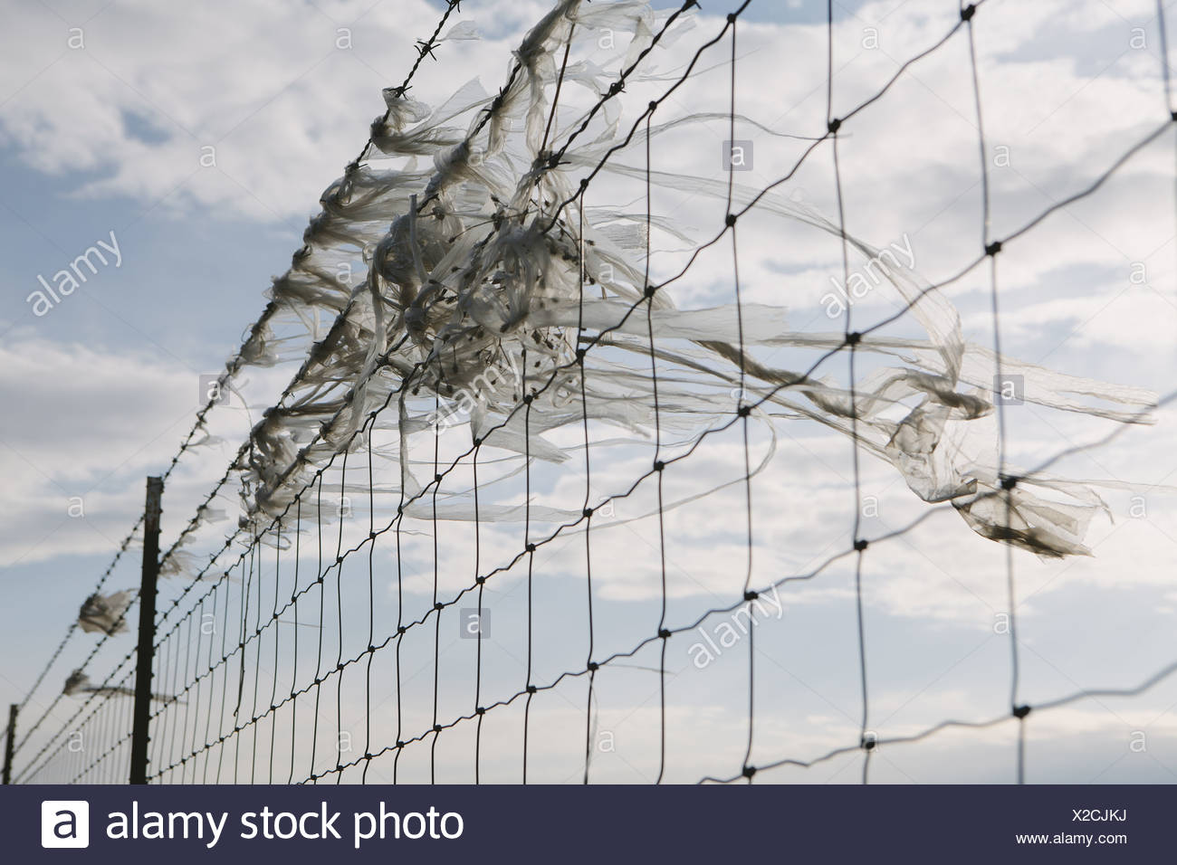 Seattle Washington USA shredded plastic bag caught on barbed wire fence - Stock Image