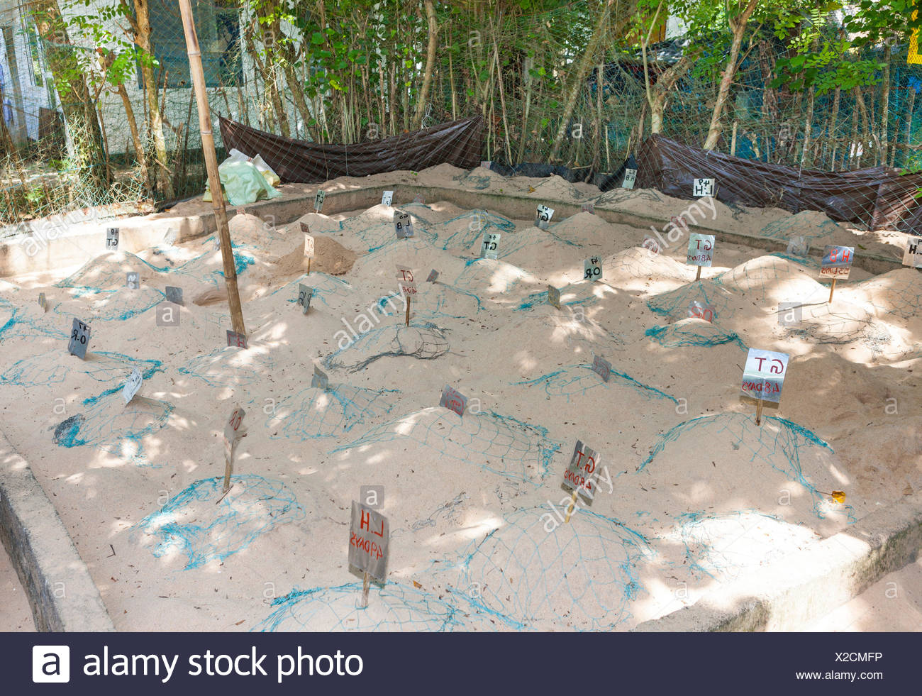 Breeding station for sea turtles, near Kosgoda, Hegalla Piyagama Region, Southern Province, Sri Lanka - Stock Image
