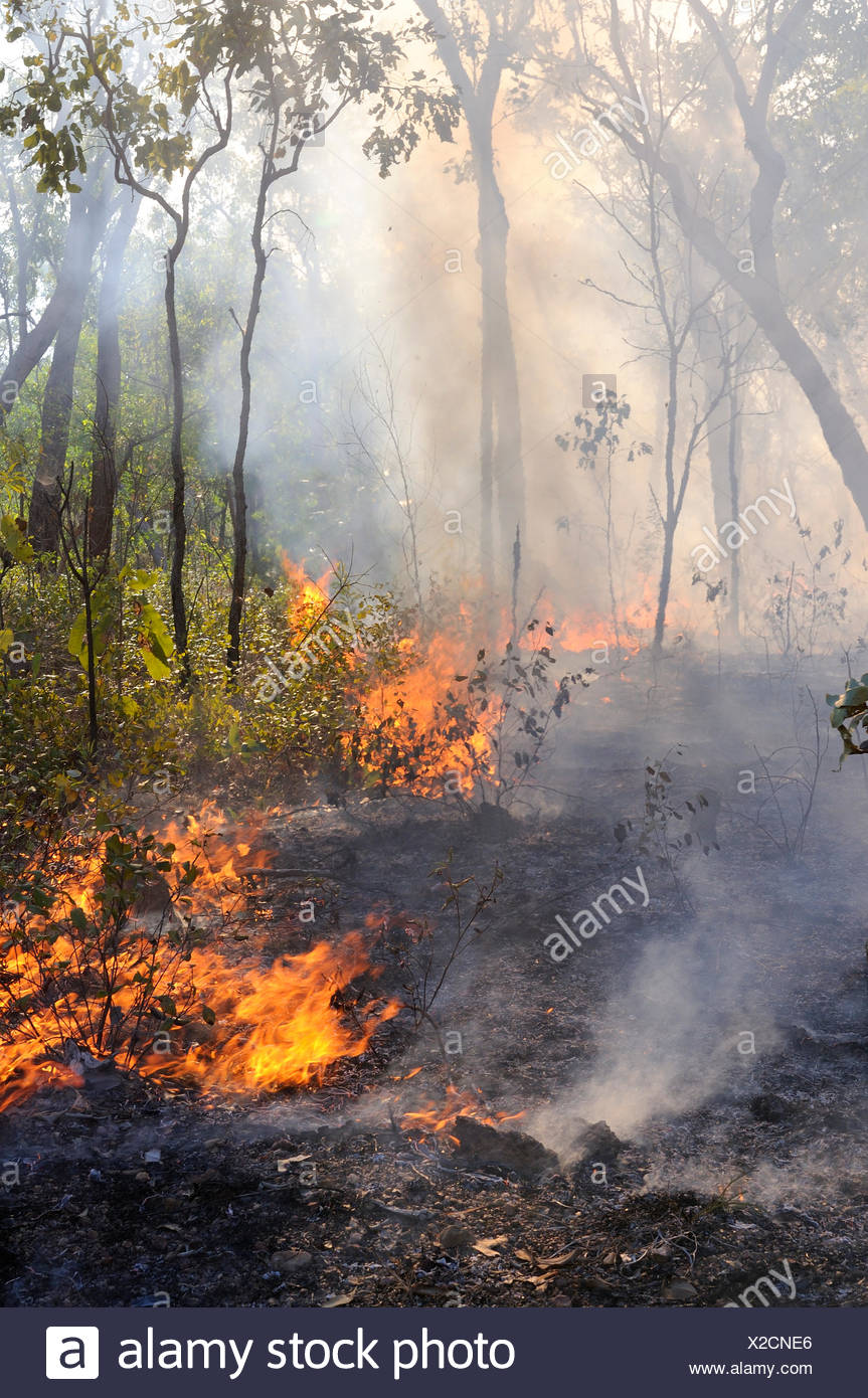 Bush fire during dry season, Northern Territory, Australia - Stock Image