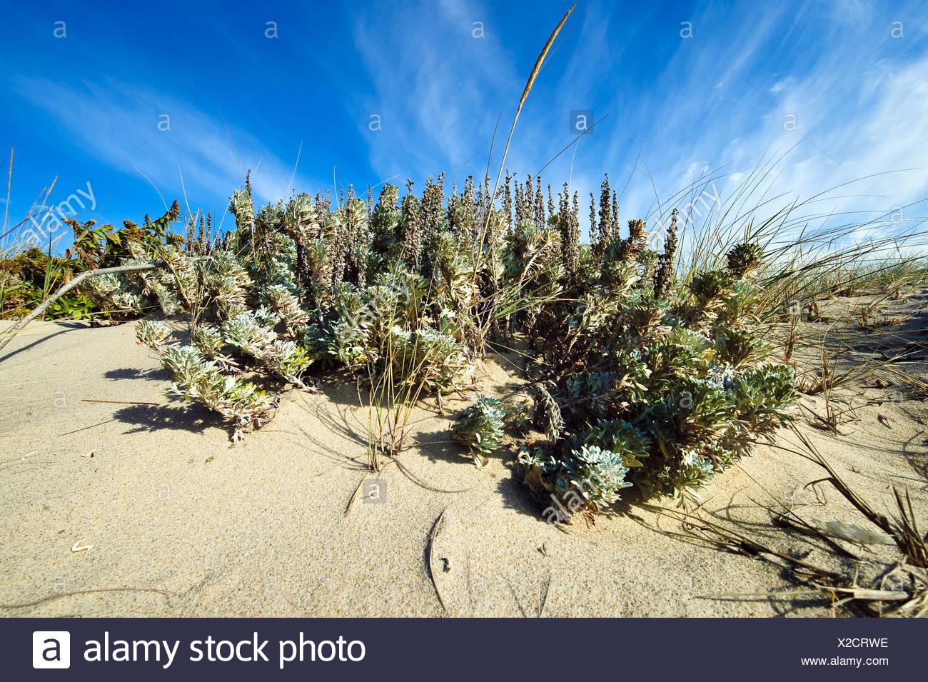 Head of Meadow Beach Truro Cape Cod MA - Stock Image