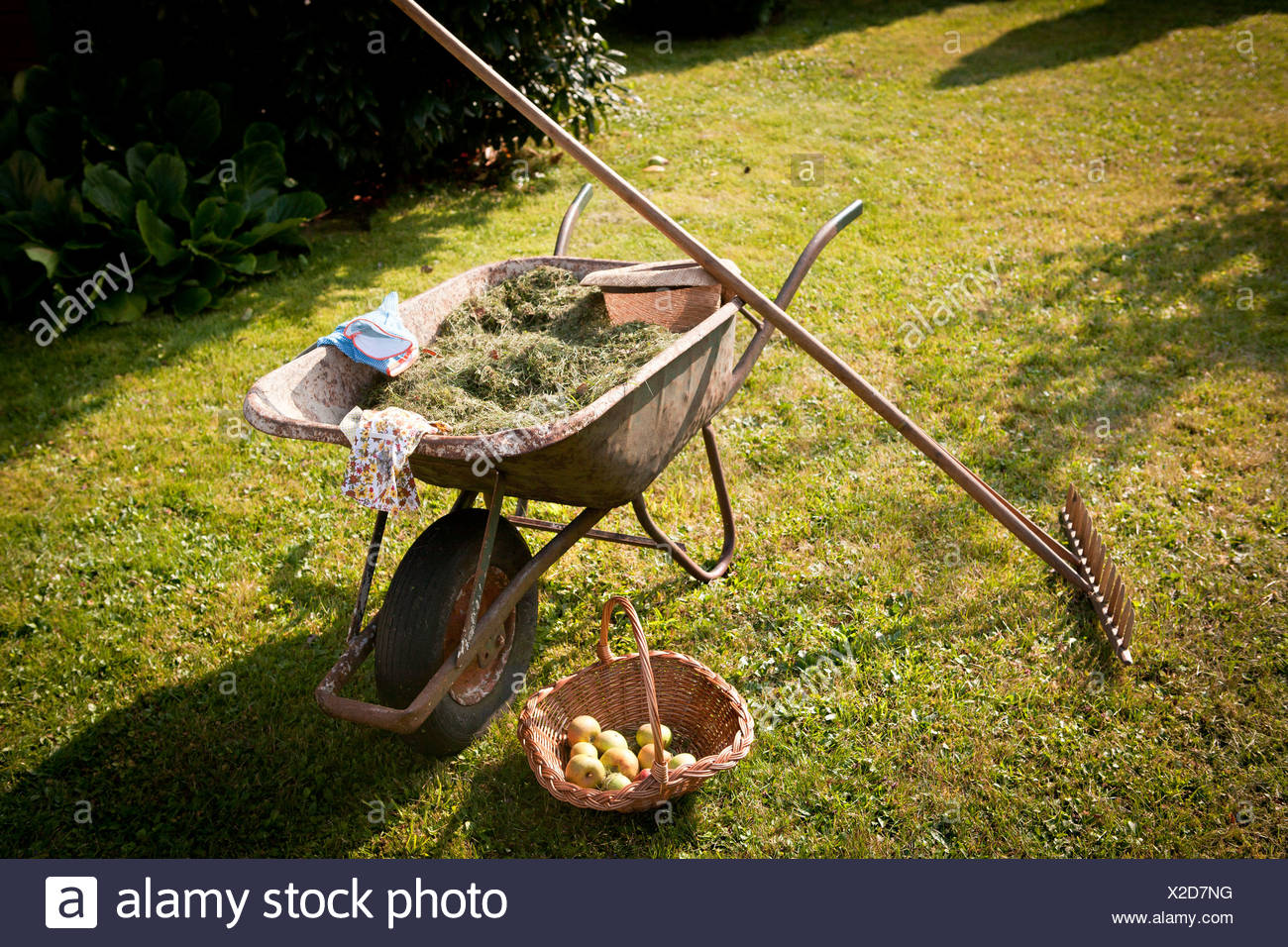 Wheelbarrow full of mown grass in the garden, Munich, Bavaria, Germany - Stock Image