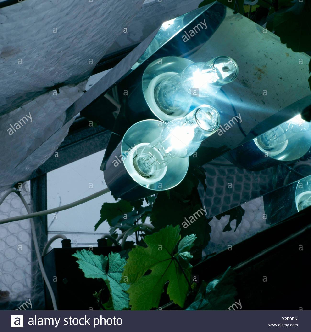 Grow Lights Stock Photos & Grow Lights Stock Images - Alamy