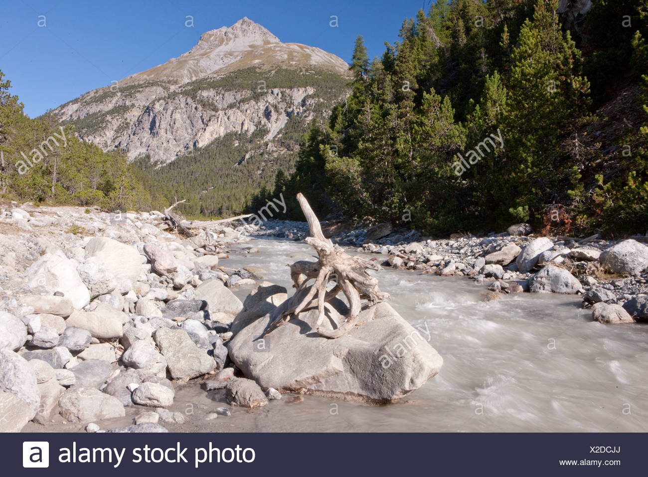 National park, Ofenpass, nature, Il Fuorn, wood, forest, canton, GR, Graubünden, Grisons, Switzerland, Europe, brook, scenery, l - Stock Image