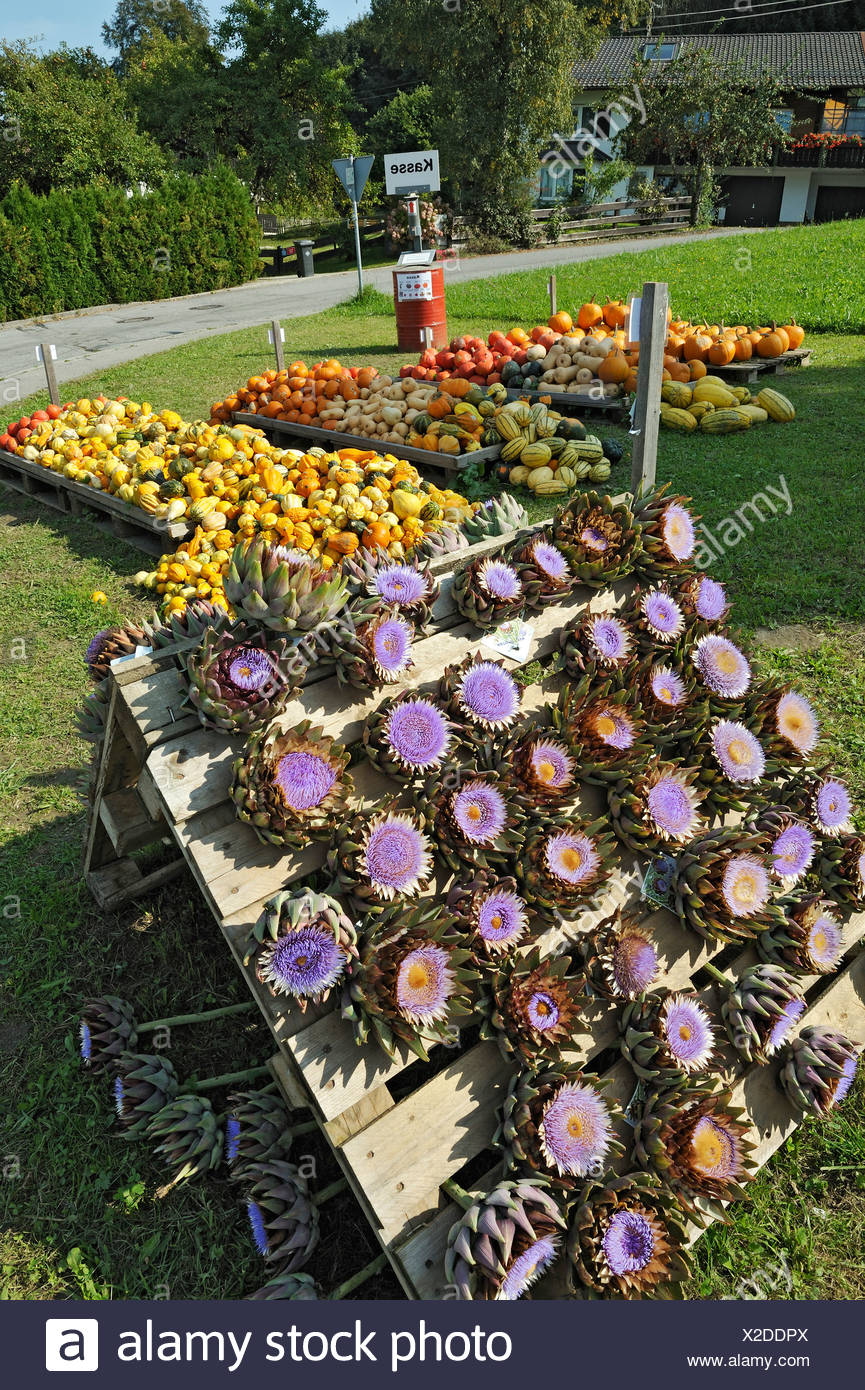 Artichoke (Cynara) flowers, Pumpkins (Cucurbita) and Ornamental Gourds (Cucurbita pepo) near Amerang, Bavaria, Germany, Europe - Stock Image
